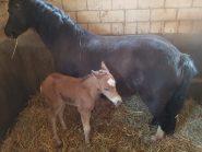 Ein Fohlen ist geboren!