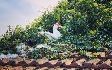 Gertrud auf dem Dach